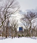 New York City - Central Park In Winter