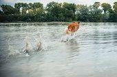 Dog Running In The Water, Splash