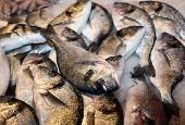 Bream Caught Fresh In The Mediterranean Sea At The Fish Market
