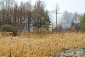 pic of boggy  - Landscape - JPG