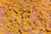 pic of lichenes  - Lichen Texture Pattern Background on the Floor - JPG