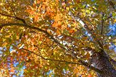 picture of fall trees  - Autumn - JPG