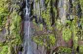 image of vegetation  - waterfall in a rocky wall with vegetation on Madeira Island - JPG