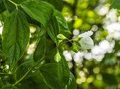 image of raindrops  - White Rose like Bloom with Beautiful Illuminated Background - JPG