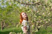 pic of orchard  - lovely red - JPG
