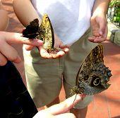 Mein Schmetterling ist größer als deine!