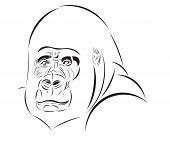 Vector sketch of the gorilla head