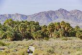 Coachella Valley Preserve poster