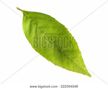 poster of Natural ecology tree leaf season botany isolated on white background