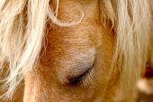 Pony Stute Stirn