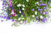 picture of lobelia  - Blue - JPG
