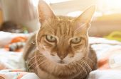 unhappy fat tabby cat look at you poster