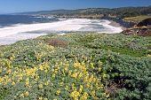 Sea Ranch coast, California