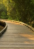 Curved Wooden Path