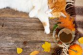 Lazy Cat Sleeps On Soft Woolen Plaid, Winter Or Autumn Weekend Concept, Top View With Copy Space poster