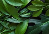Tropical Leaves And Monstera Leaf poster