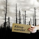 Cardboard Sign With The Inscription Climate Change. In The Background A Dead Forest. poster