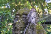 Portrait Of A Monkey Sitting On A Stone Sculpture Of A Monkey At Sacred Monkey Forest In Ubud, Islan poster