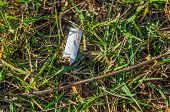 Discarded Cigarette Butt In The Grass. The Cigarette Butt On The Ground. Environment Protection. Pol poster