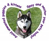 pic of home is where your heart is  - Avoid unwanted puppies and kittens - JPG