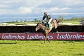 Fairyhouse Steeplechase Winner Caduceus