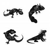 Vector Illustration Of Zoo And Environment Symbol. Collection Of Zoo And Reptile Stock Symbol For We poster