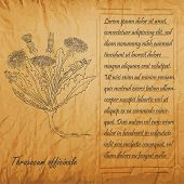Banner With Black Bush Of Common Dandelion. Square Handdrawn Frame With Text. Herbal With Latin Name poster