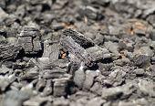 Old Coal