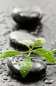 Spa stones and green leaf with water drops