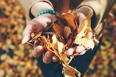 Autumn Leaves In Girl Hands. Autumn Mood. Fall Time. Sunny Autumn Weather. Autumn Girl Enjoy Fallen  poster