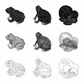 Vector Illustration Of Wildlife And Bog Icon. Collection Of Wildlife And Reptile Stock Vector Illust poster
