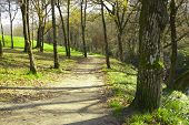 stock photo of street-walker  - dirt road and walk through the forest landscape with old trees - JPG