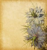 old paper background with nigella flowers