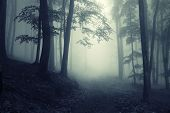 stock photo of rain  - Light in a dark strange forest with fog - JPG