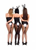 stock photo of bunny ears  - Sexy playgirls wearing a bunny costumes back view isolated on white background - JPG