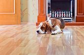 image of dog-house  - The dog has a rest on wooden to a floor near to a fireplace - JPG