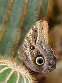 Постер, плакат: Тропические бабочки на Кактус