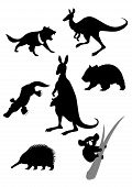 stock photo of wallabies  - Vector image of silhouettes of australian animals - JPG