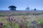 stock photo of spiderwebs  - spiderweb in waterdrops on flowering heatherduring misty morning - JPG