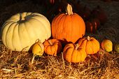 assorted pumpkins in late afternoon