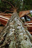 Fallen Tree on Truck