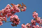 foto of brighten  - Cherry blossoms brightening up the view at Capernwray Harbour - JPG