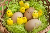 Easter Basket Yellow Chicks Speckled Eggs