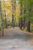 Foliage and a Fall Path