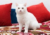 White Cat Sitting On A Colorful Bedspread
