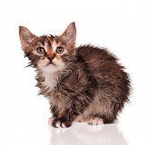 Wet little kitten