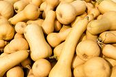stock photo of butternut  - Background Of a lot of Butternut Pumpkins - JPG