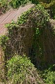 stock photo of slave-house  - old slave quarters being reclaimed by nature - JPG