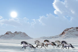 foto of wild horse running  - A herd of wild horses run in the snows of a bright winter day - JPG