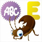 E is for Earwig